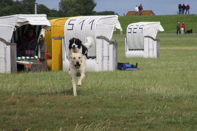 Laufrouten für den Hund