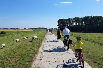 Die Küsten-Radtour: das ABC von Salzwiesen, Pütte, Deich und Tee